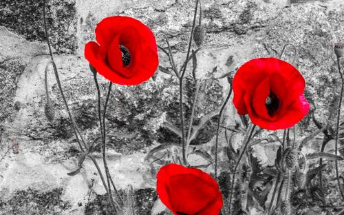 """Coquelicots""    Alex Fried"