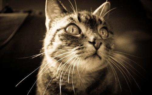 """Le chat"" Ludivine Bossard (photo Club Pavillon)"